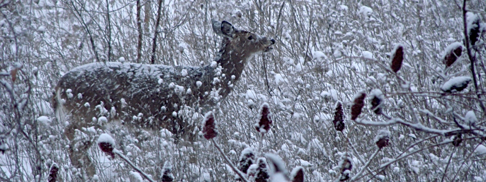 deer in first snow